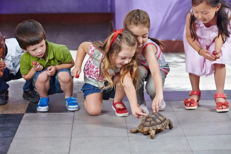 Group of toddlers petting a turtle during school visit.
